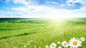 Bright Spring Day
