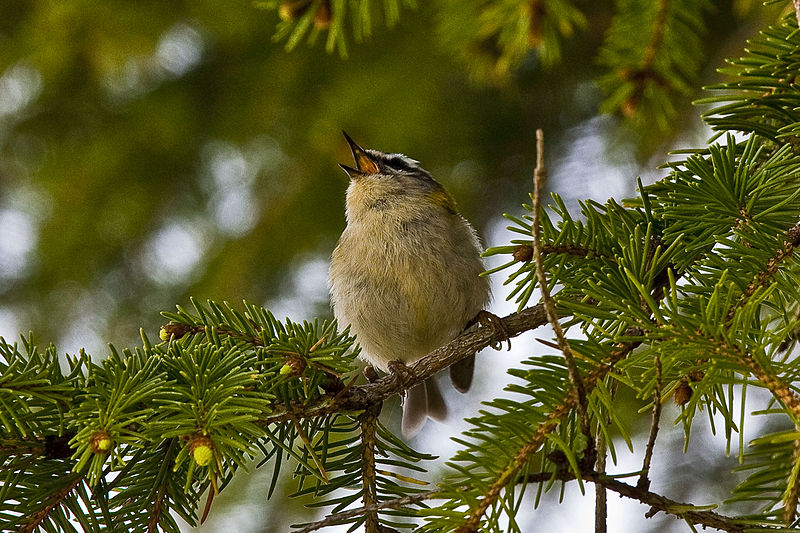https://coffeewiththelord.files.wordpress.com/2015/06/bird-singing-in-a-tree.jpg