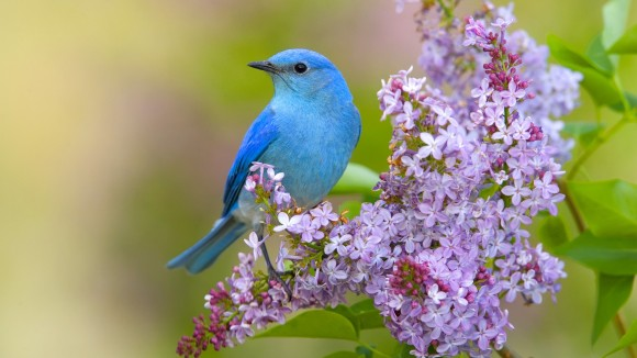 Birds and spring flowers