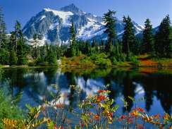 Spring Mountain Scene