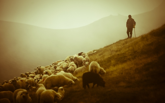 Pastor - Shepherd